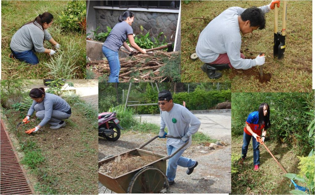 The NEDA-CAR staff cleaning the office compound at the Botanical Garden along Leonard Wood Road, Baguio City